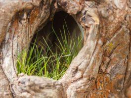 Лечение дупла в дереве