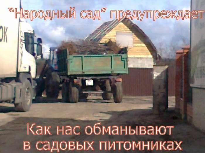 ОБМАН В САДОВЫХ ПИТОМНИКАХ. Фото 4