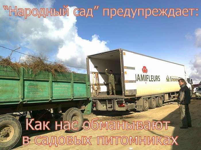ОБМАН В САДОВЫХ ПИТОМНИКАХ. Фото 5