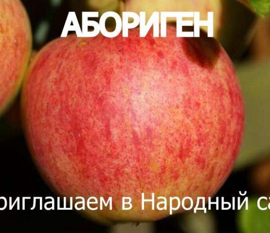 СОРТ ЯБЛОК АБОРИГЕН - описание, фото