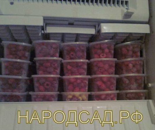 Ягоды в морозильной камере