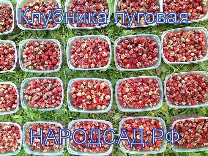 Свежезамороженные ягоды купить в Москве
